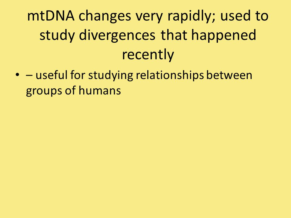 mtDNA changes very rapidly; used to study divergences that happened recently