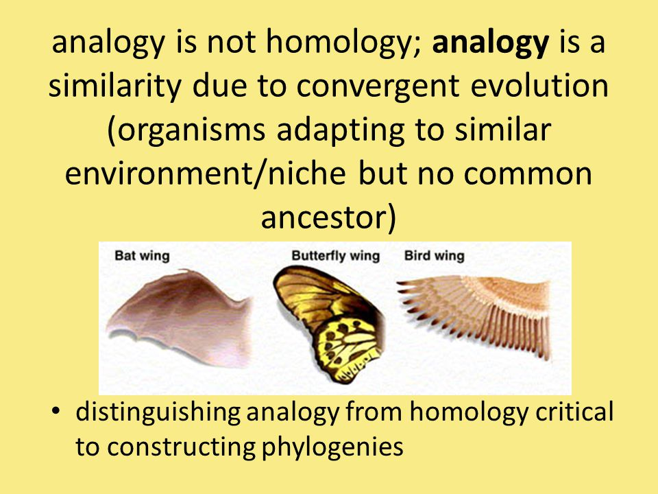 analogy is not homology; analogy is a similarity due to convergent evolution (organisms adapting to similar environment/niche but no common ancestor)