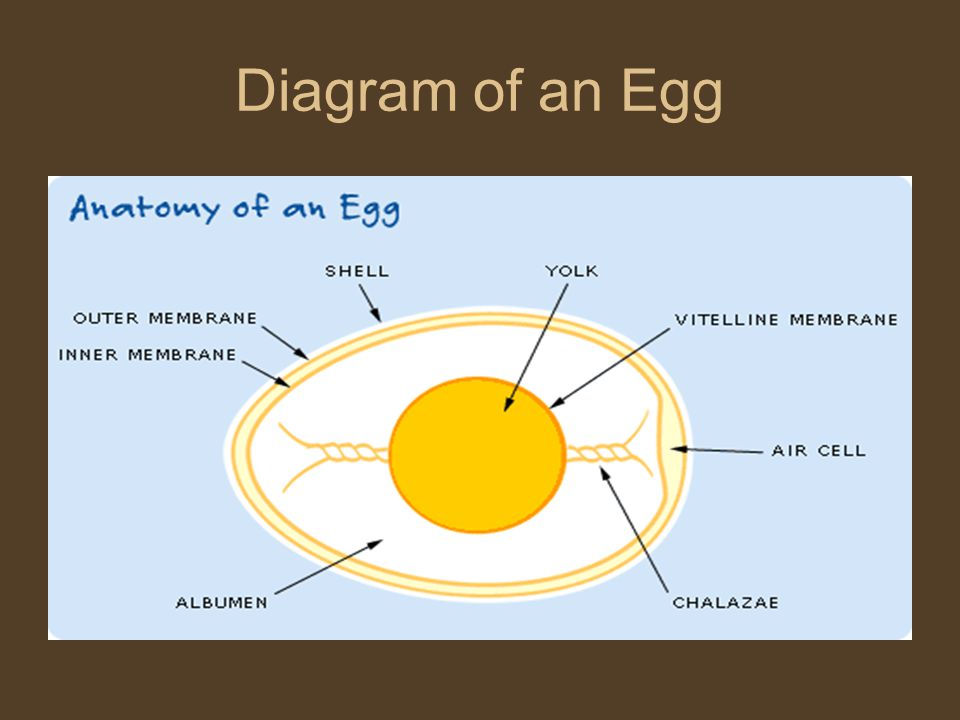 An Eggstroidinary Powerpoint Ppt Download