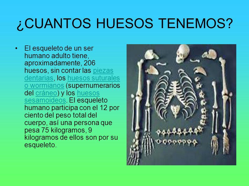 EL ESQUELETO HUMANO. - ppt video online download