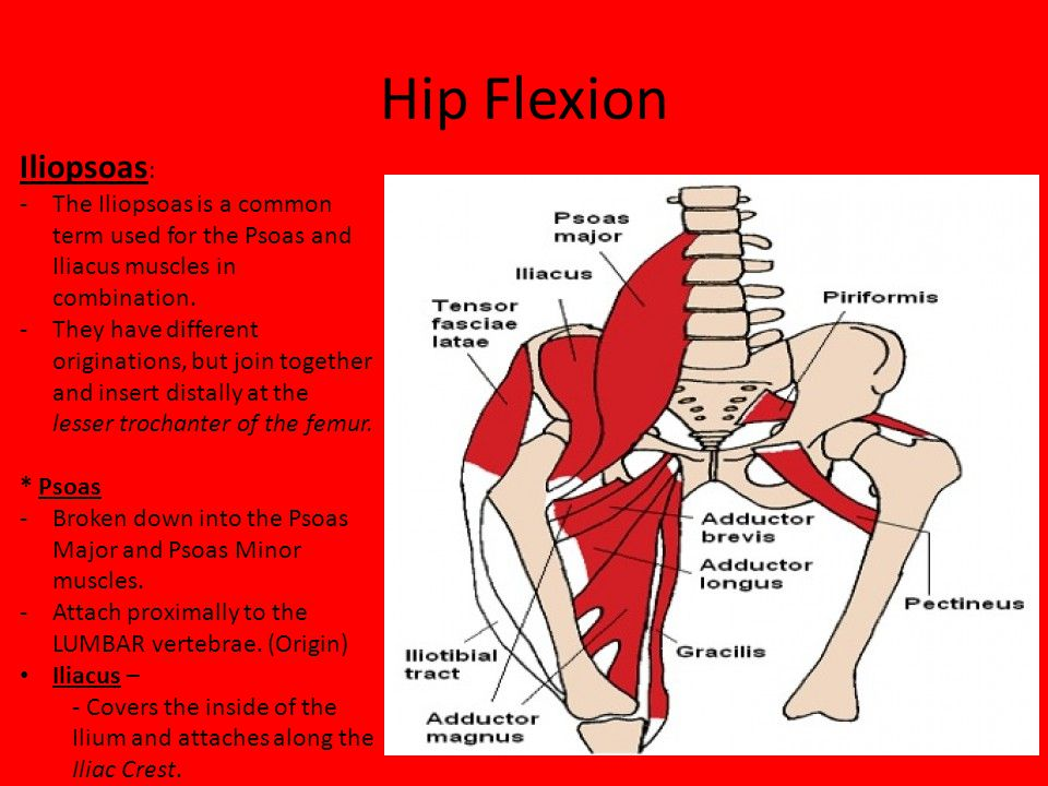 Enchanting Hip Flexor Muscle Ideas Anatomy And Physiology Biology