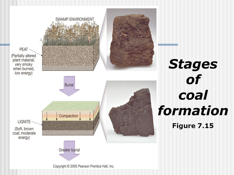 Stages of coal formation