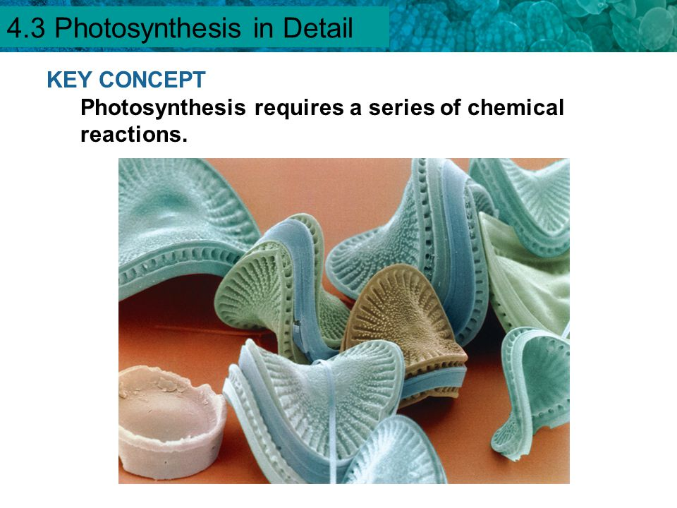 4.3 Photosynthesis in Detail