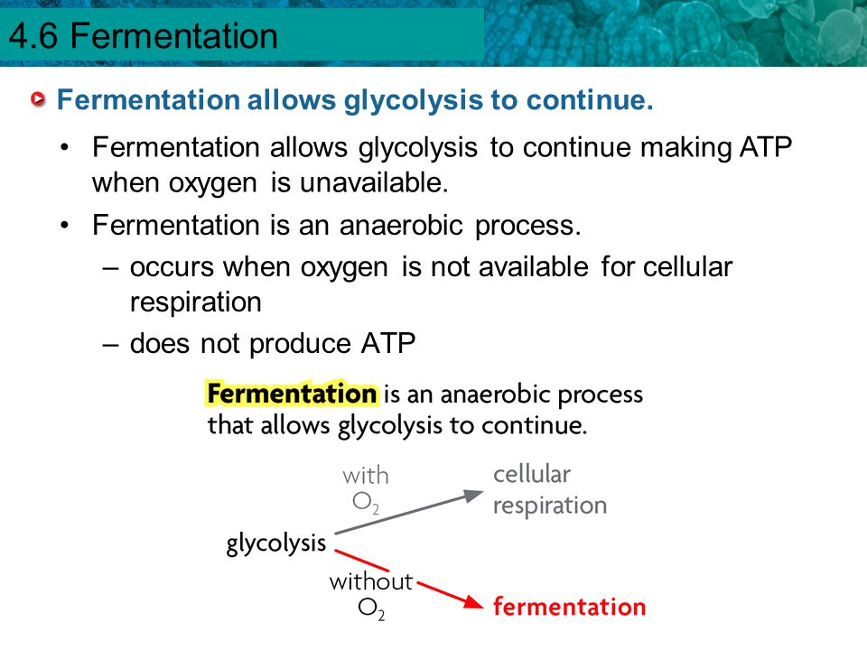 Fermentation allows glycolysis to continue.