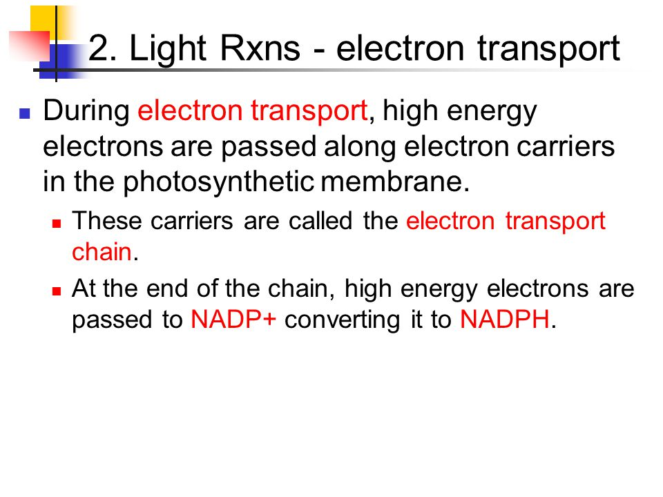 2. Light Rxns - electron transport