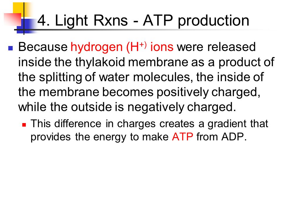 4. Light Rxns - ATP production