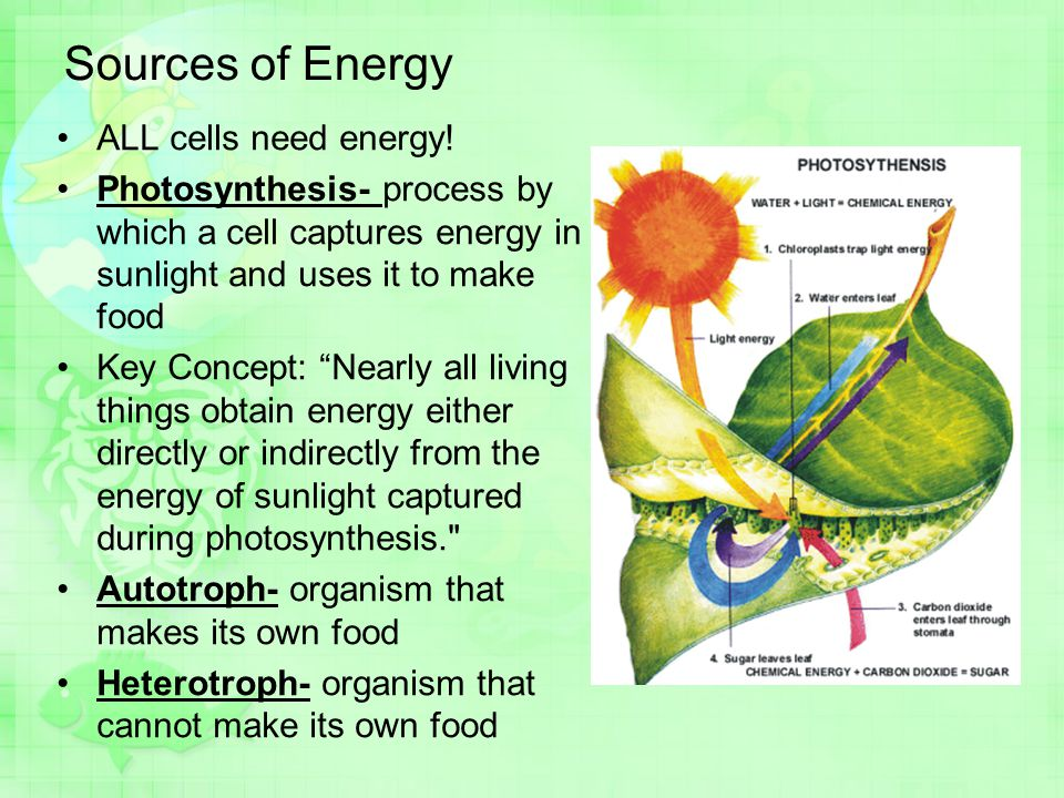Sources of Energy ALL cells need energy!