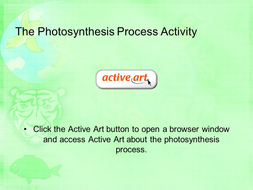 The Photosynthesis Process Activity