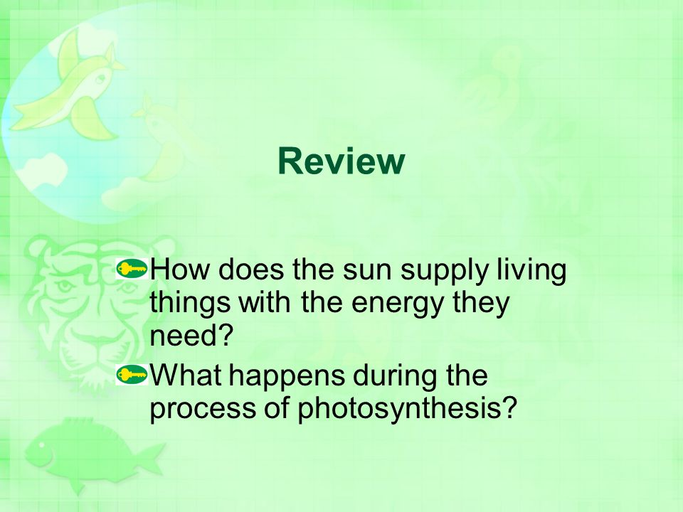 Review How does the sun supply living things with the energy they need.