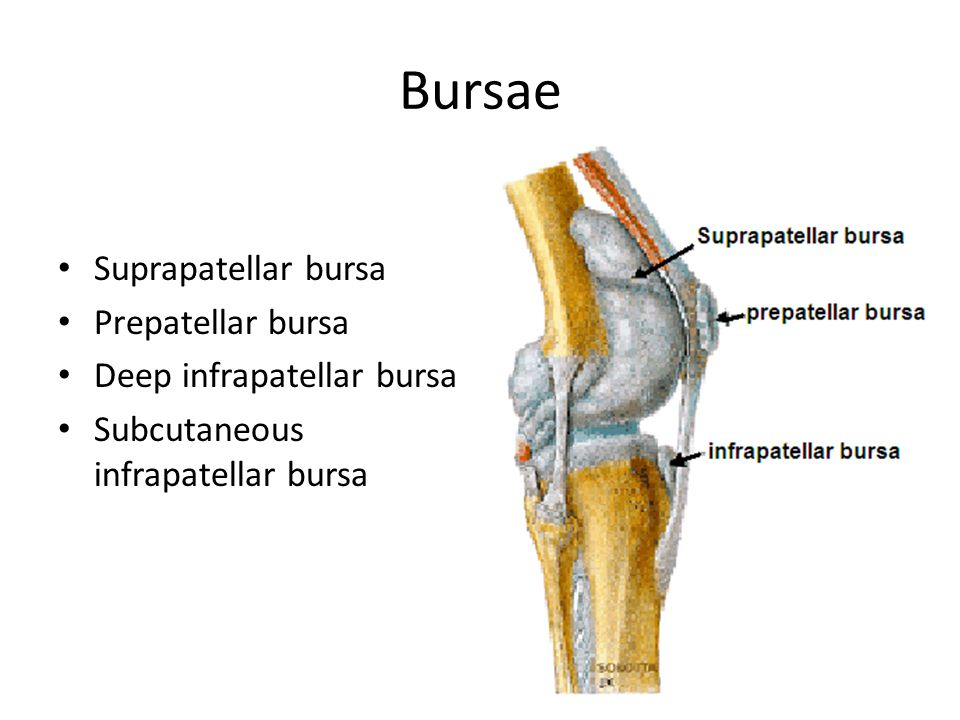 Knee (Tibiofemoral) Joint and Foot - ppt video online download