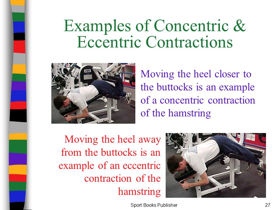 Examples of concentric and eccentric contractions.