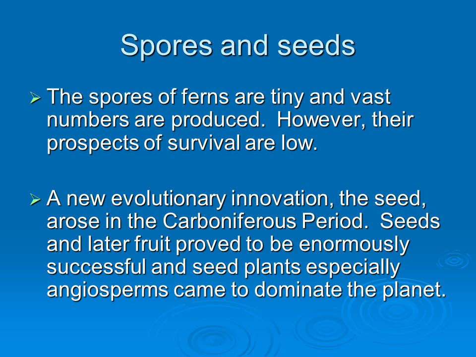 Spores and seeds The spores of ferns are tiny and vast numbers are produced. However, their prospects of survival are low.