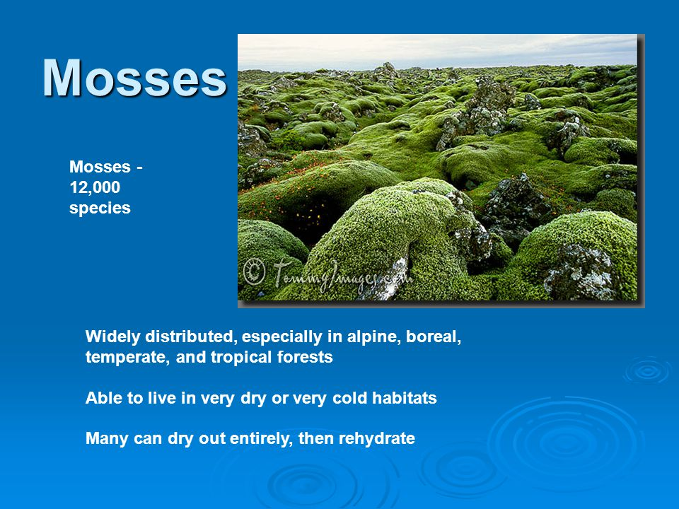 Mosses Mosses - 12,000 species