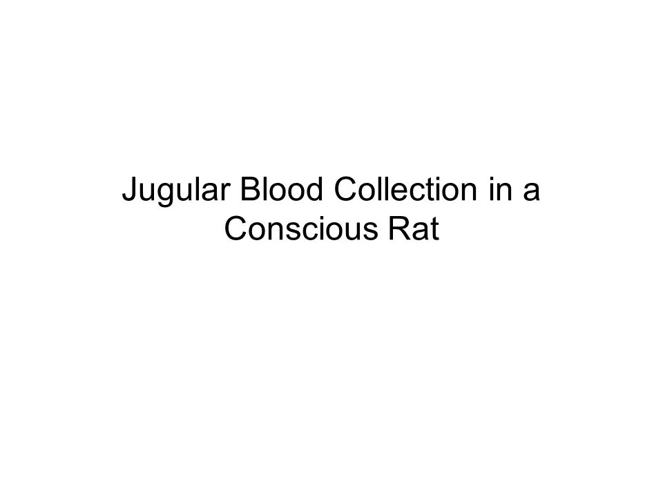 Jugular Blood Collection in a Conscious Rat