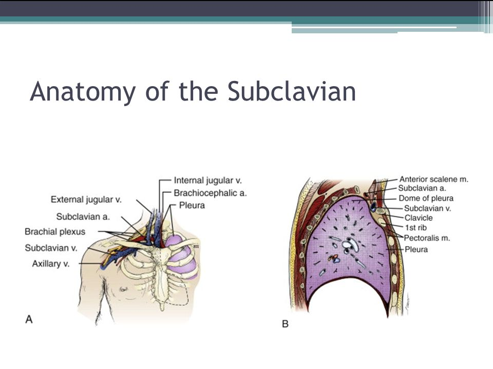 Beautiful Subclavian Line Anatomy Crest - Anatomy And Physiology ...