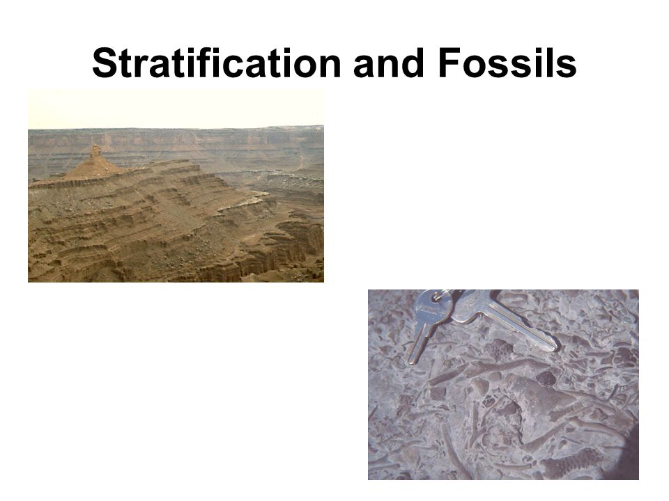 Stratification and Fossils