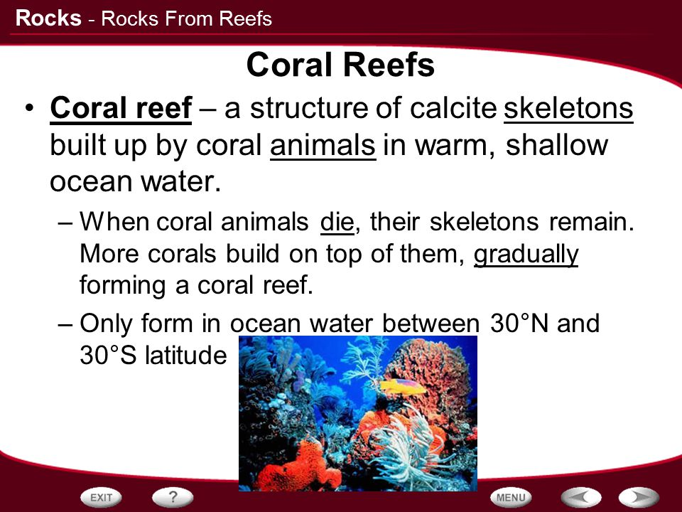 - Rocks From Reefs Coral Reefs. Coral reef – a structure of calcite skeletons built up by coral animals in warm, shallow ocean water.