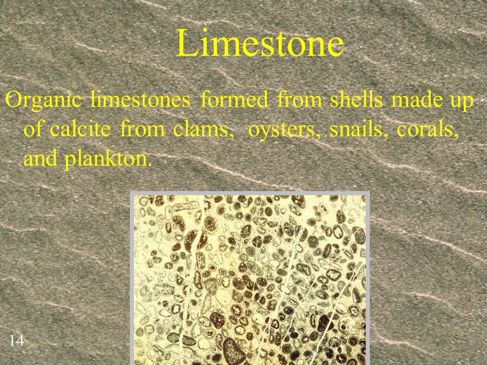 Limestone Organic limestones formed from shells made up of calcite from clams, oysters, snails, corals, and plankton.