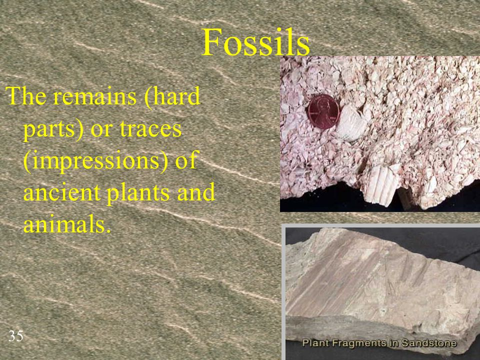 Fossils The remains (hard parts) or traces (impressions) of ancient plants and animals.