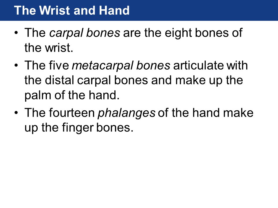 The Wrist and Hand The carpal bones are the eight bones of the wrist.