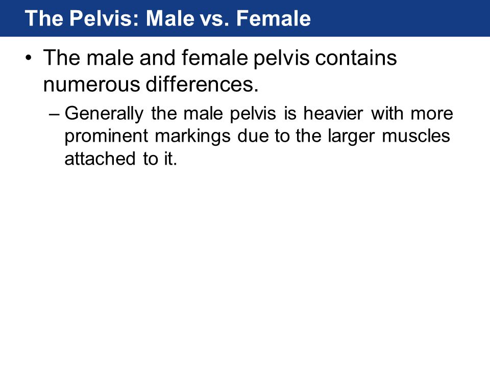 The Pelvis: Male vs. Female