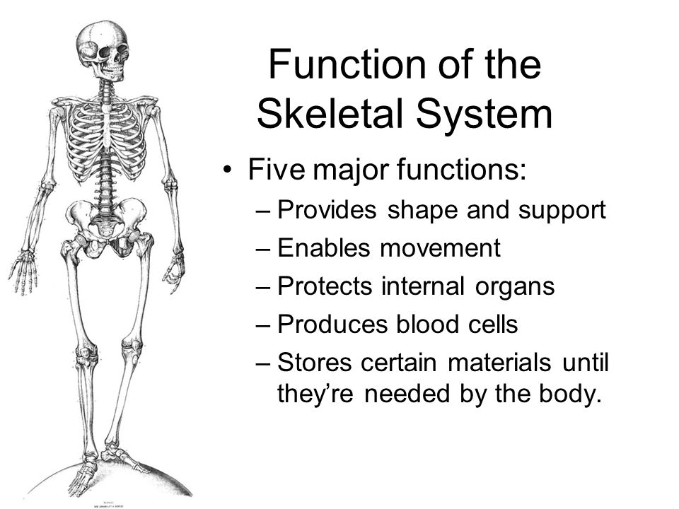 The Skeletal System Tuesday February 2 2010 Pages Ppt Video