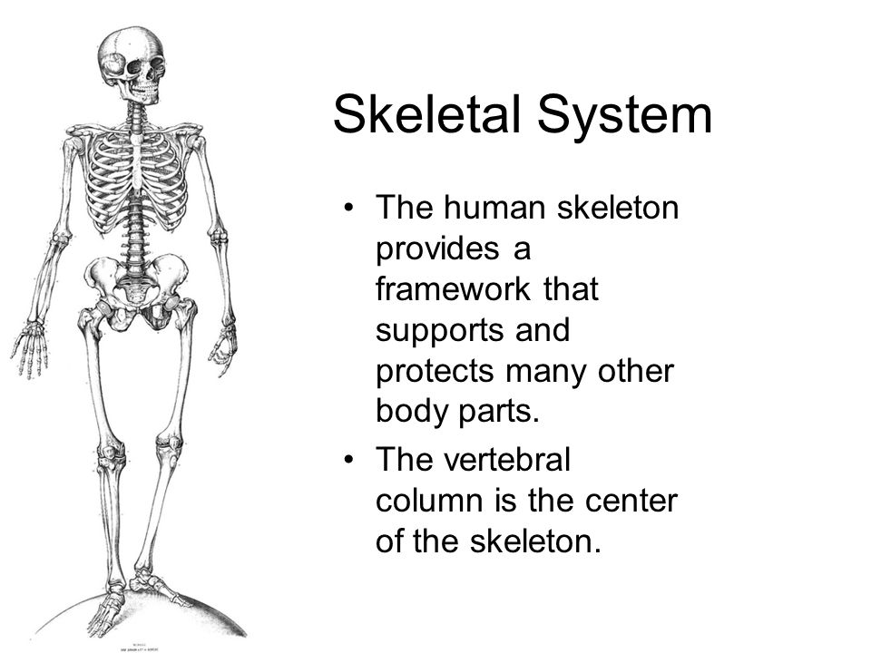 The Skeletal System Tuesday, February 2, 2010 Pages - ppt video ...