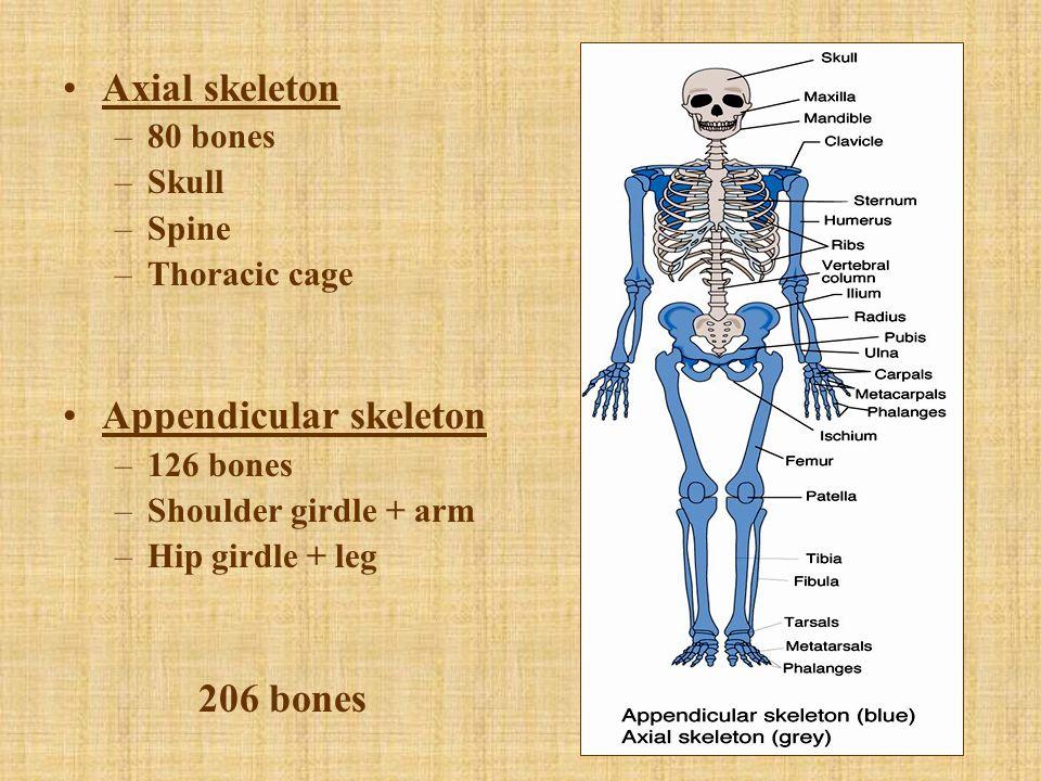Medical Terminology Of Skeletal System Diagrams Online Wiring