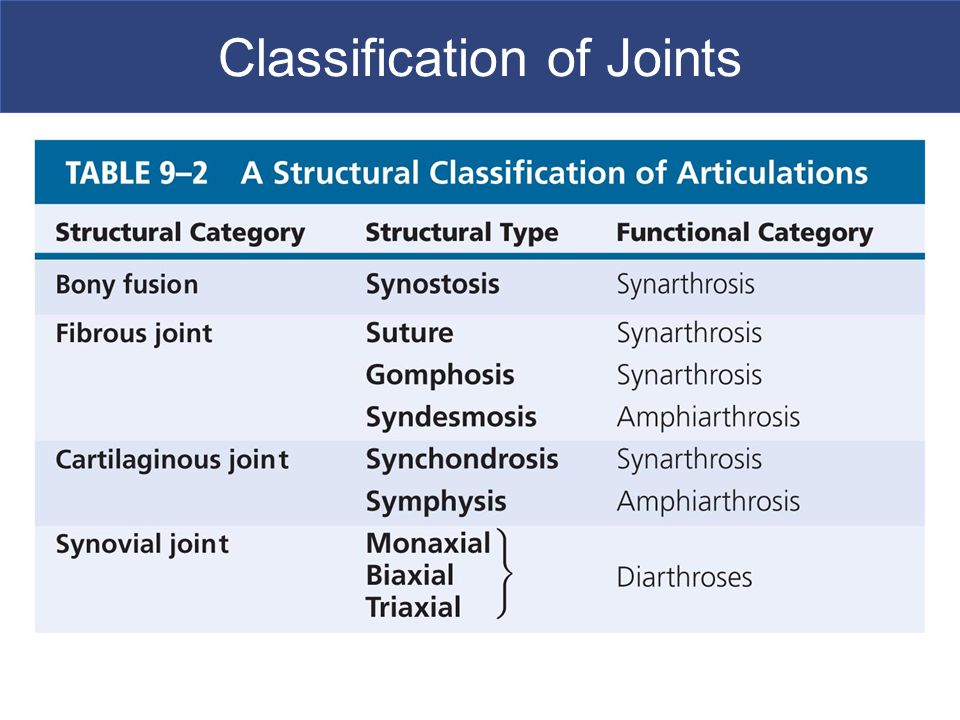 Articulations And Joints Ppt Video Online Download Nerve cells are functionally classified as sensory neurons, motor neurons, or interneurons. articulations and joints ppt video