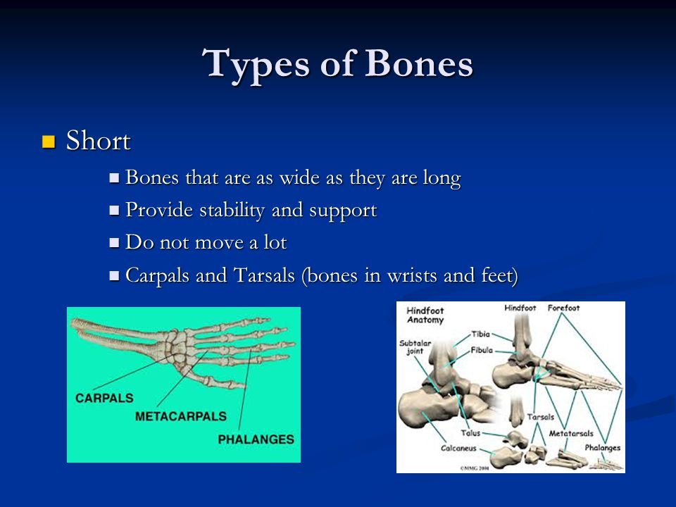 Types of Bones Short Bones that are as wide as they are long