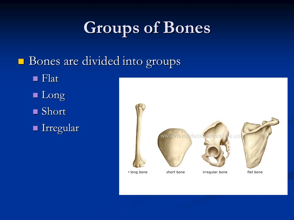 Groups of Bones Bones are divided into groups Flat Long Short
