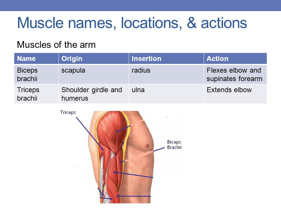 Muscle Names Movement Ppt Download