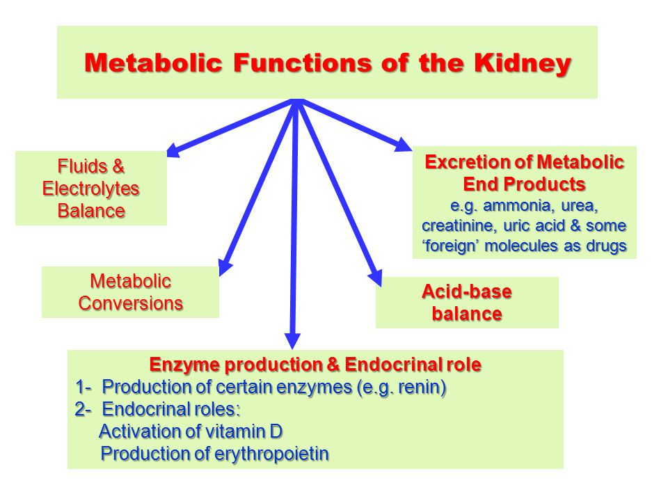 Metabolic Functions Of The Kidney Ppt Video Online Download