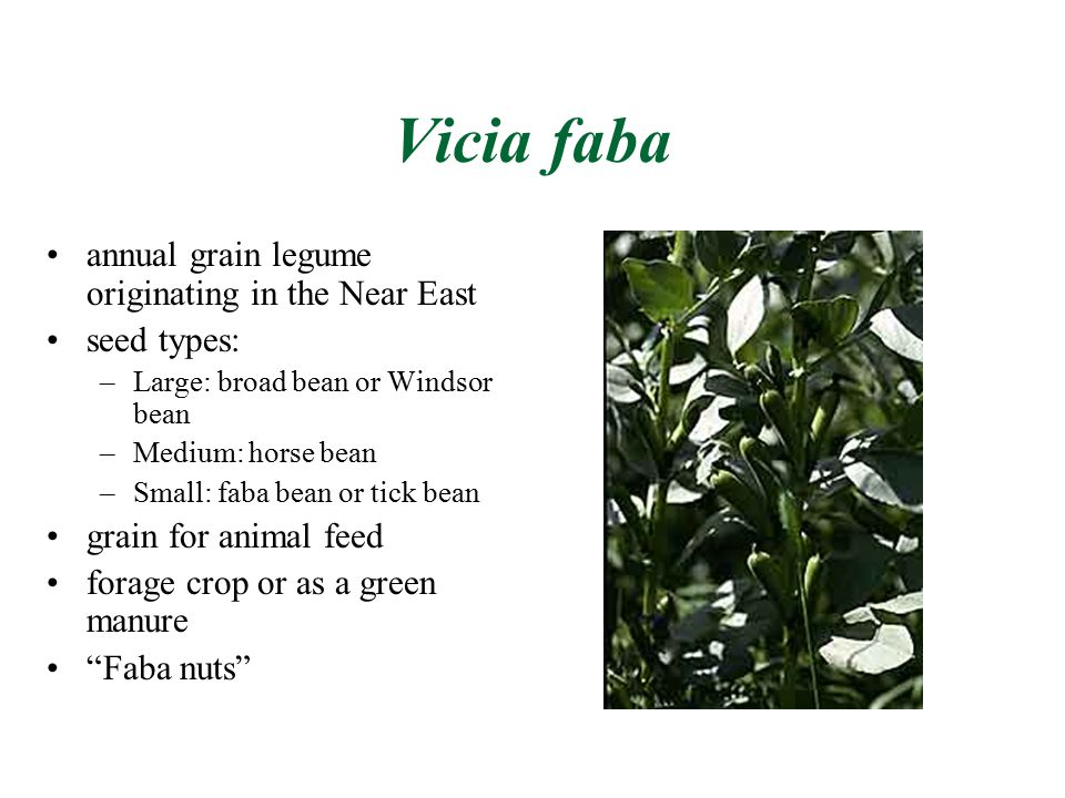 Fabales Bean Or Pea Family Ppt Video Online Download