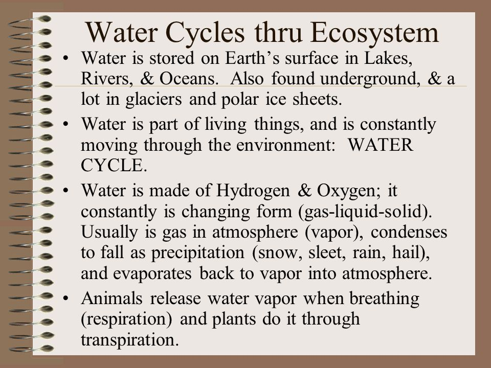 Water Cycles thru Ecosystem