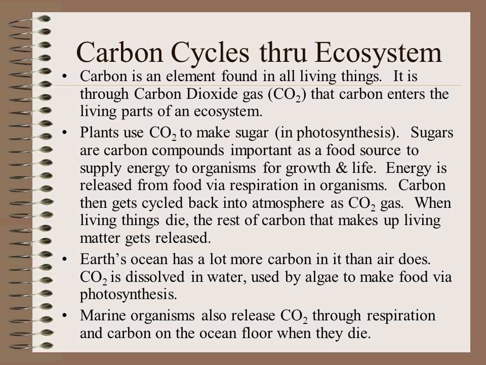 Carbon Cycles thru Ecosystem