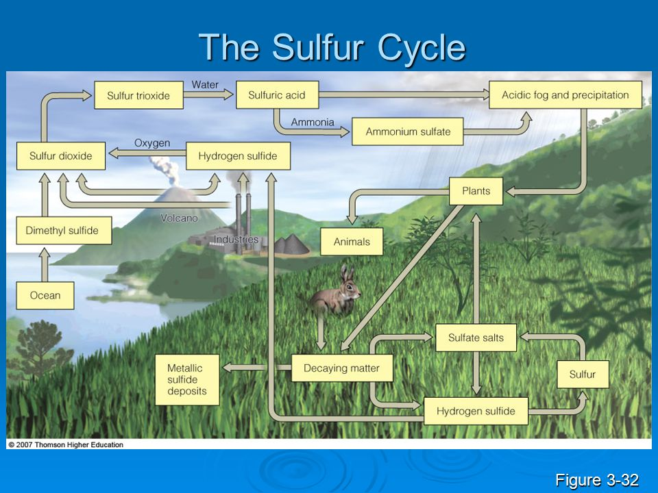The Sulfur Cycle Figure 3-32