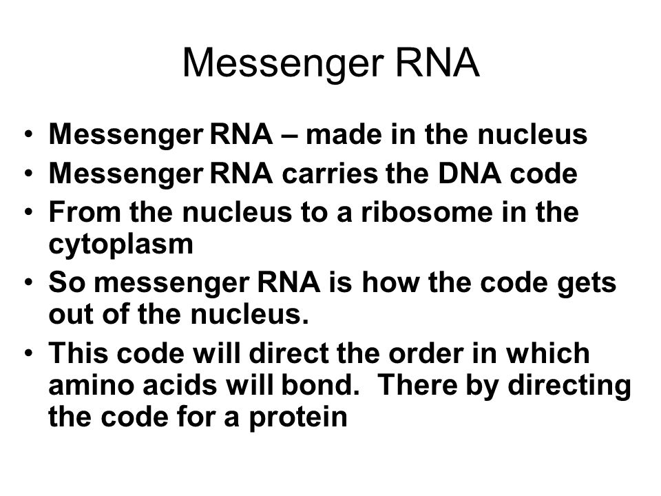 Messenger RNA Messenger RNA – made in the nucleus