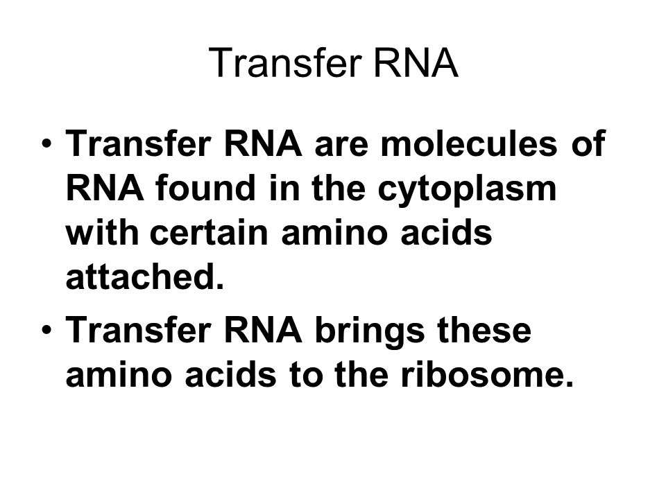 Transfer RNA Transfer RNA are molecules of RNA found in the cytoplasm with certain amino acids attached.