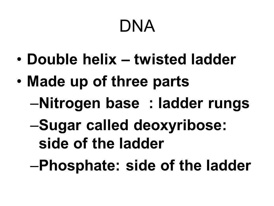 DNA Double helix – twisted ladder Made up of three parts