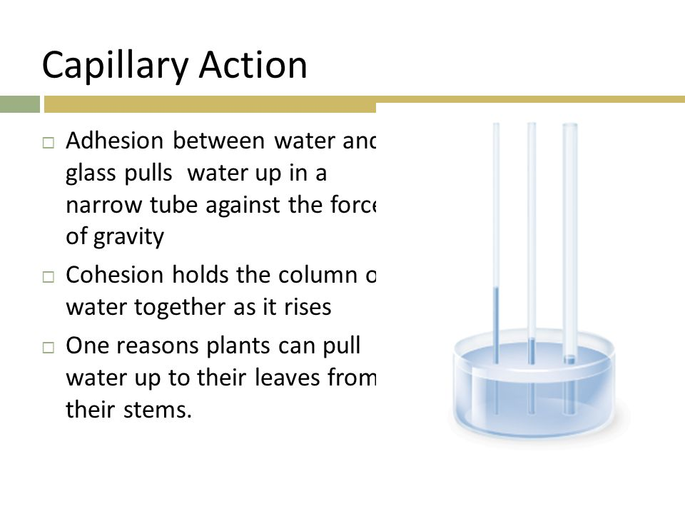 Capillary Action Adhesion between water and glass pulls water up in a narrow tube against the force of gravity.