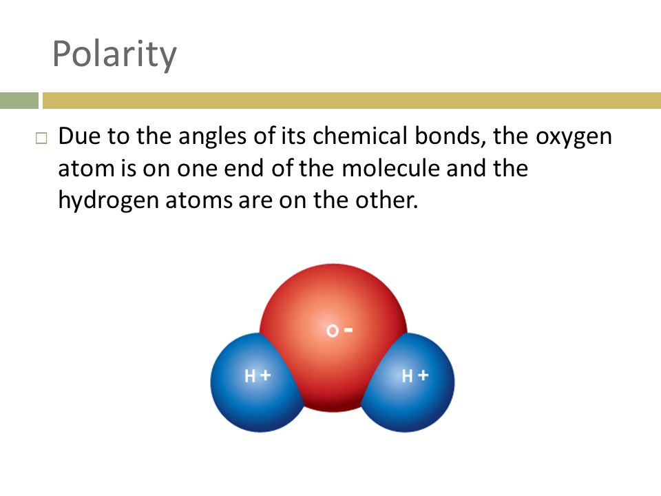Polarity Due to the angles of its chemical bonds, the oxygen atom is on one end of the molecule and the hydrogen atoms are on the other.