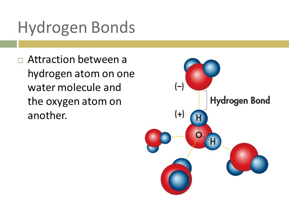 Hydrogen Bonds Attraction between a hydrogen atom on one water molecule and the oxygen atom on another.
