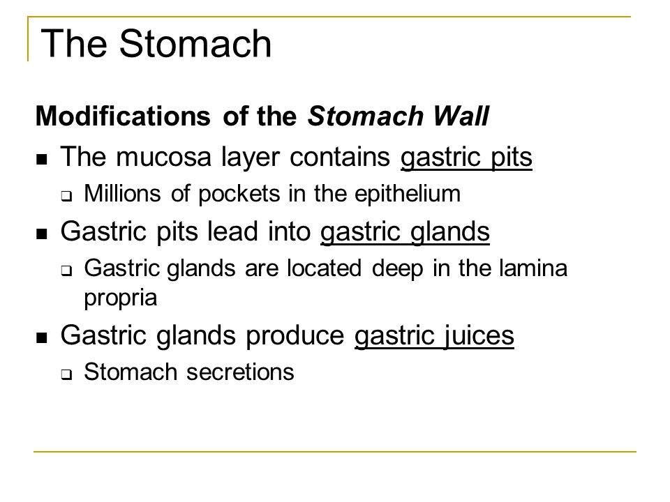 how is the muscularis externa of the stomach modified