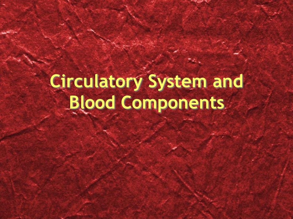 Circulatory System and Blood Components