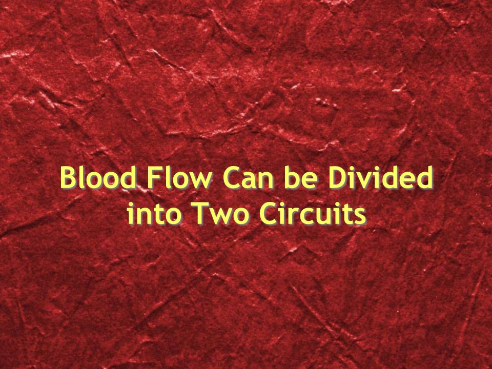 Blood Flow Can be Divided into Two Circuits