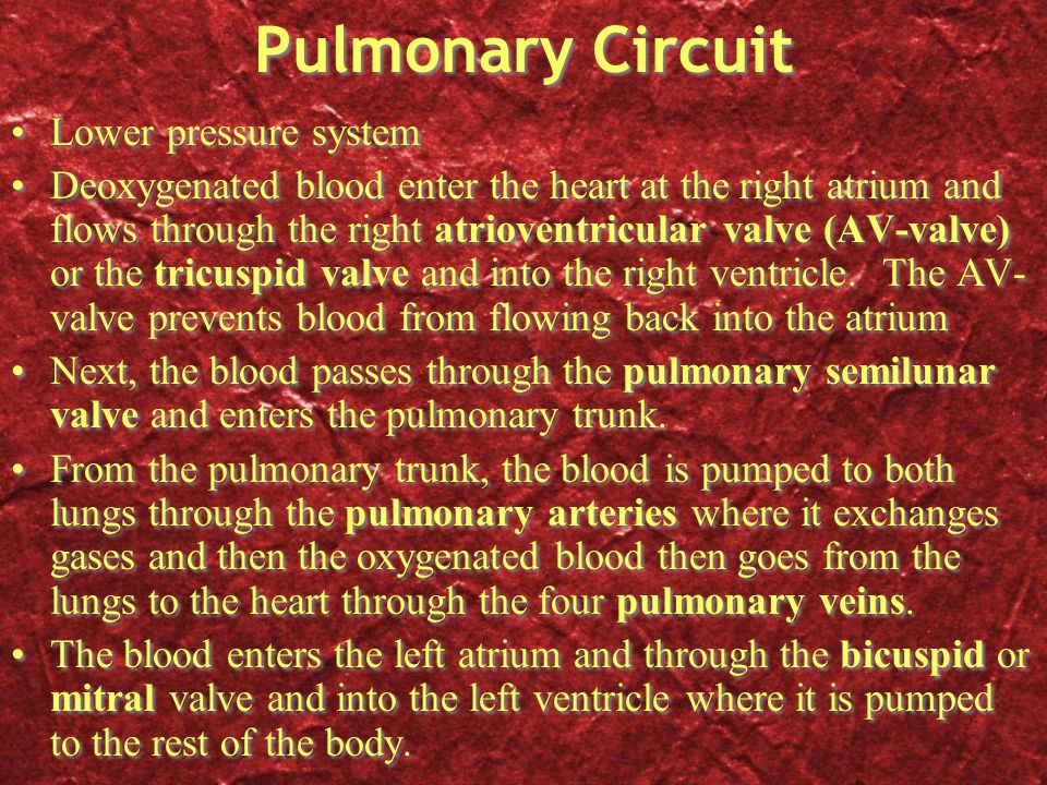 Pulmonary Circuit Lower pressure system