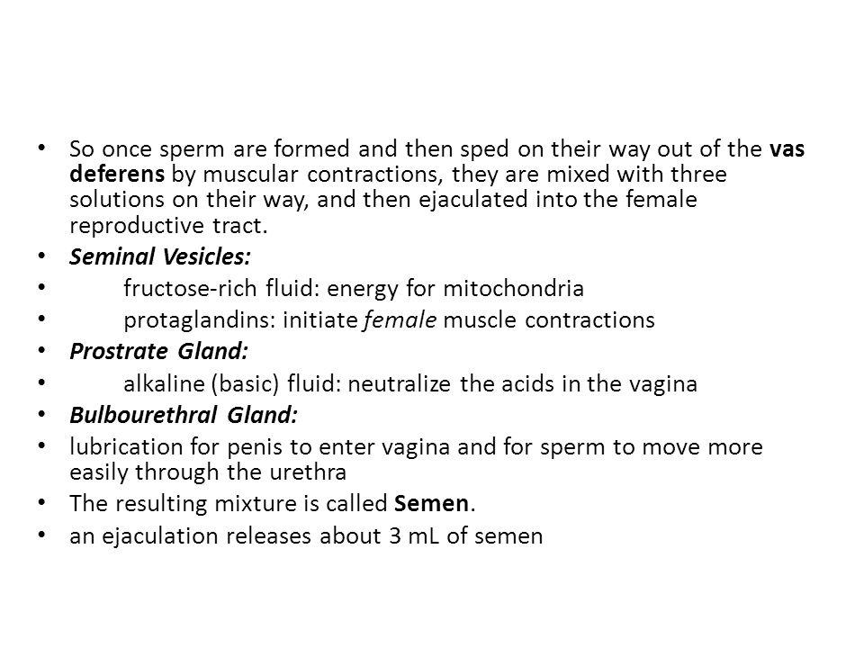 Penis enter the vagina-8571