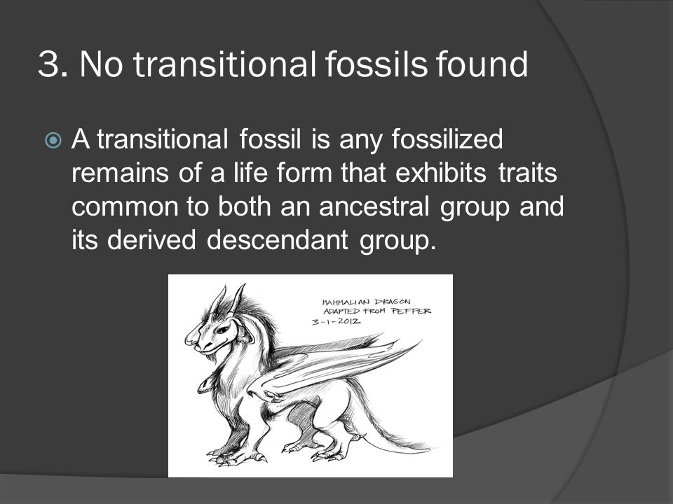 3. No transitional fossils found