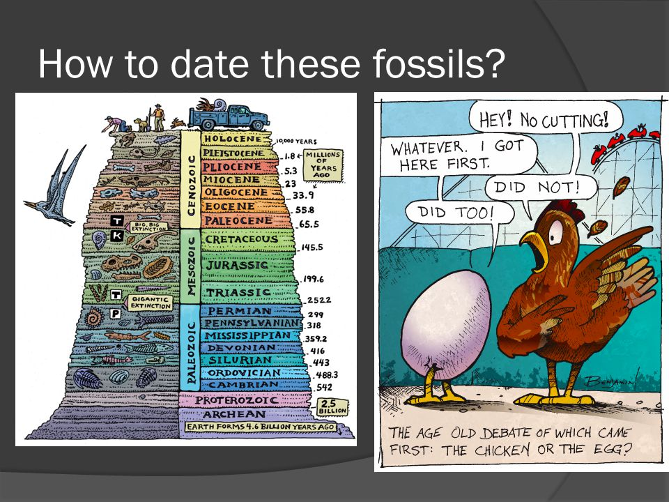 How to date these fossils